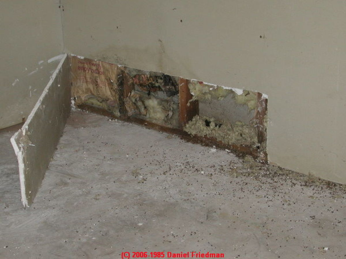 Mold can grow behind a wall.