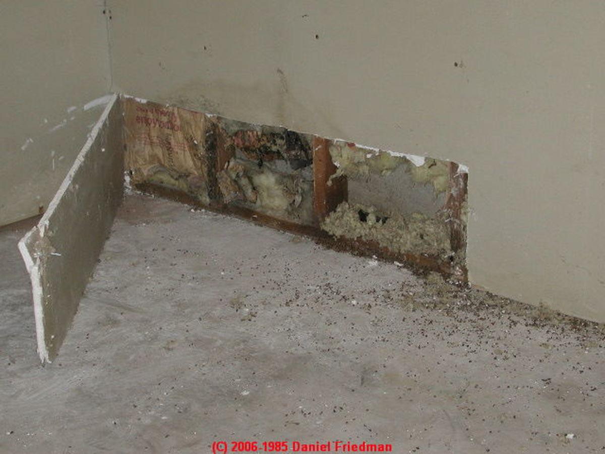 Mold can grow behind a wall.