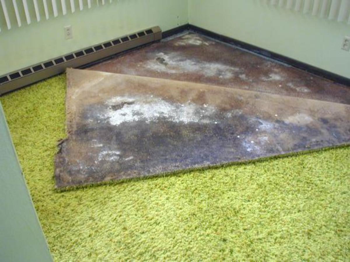 black mold was hiding under carpet