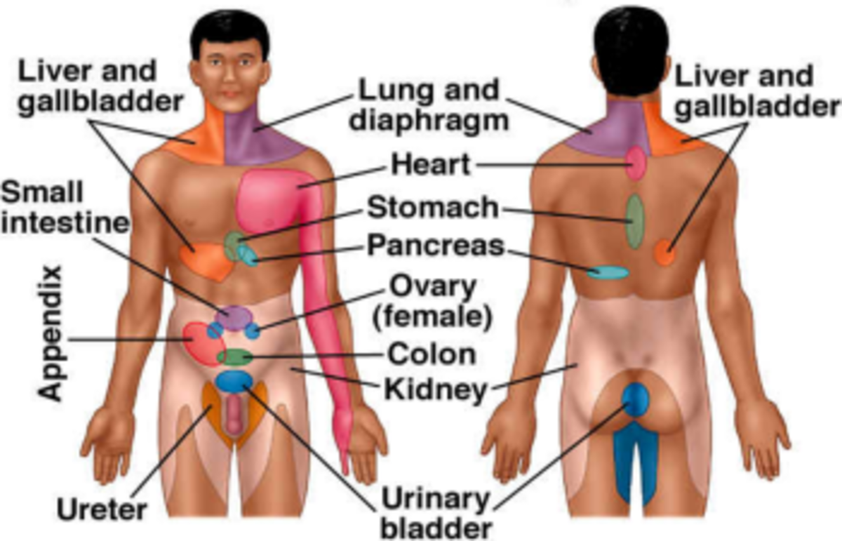 These are the areas where visceral pain can be felt but not necessarily where the pain is located.