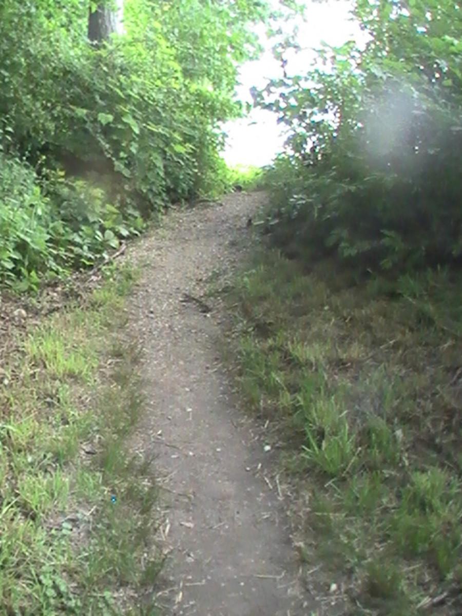 Geneva Lake Pathway - natural pathway - rough path but well worn