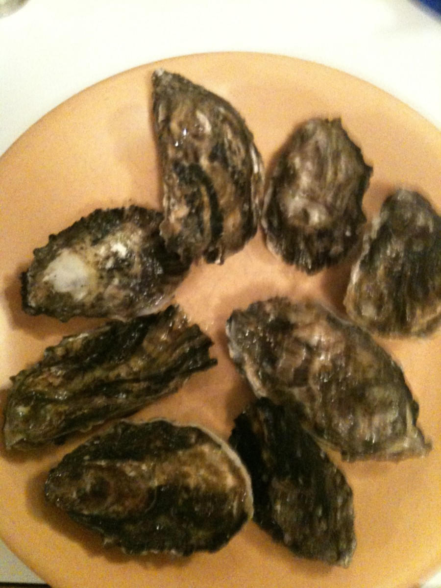 Raw oysters before opening