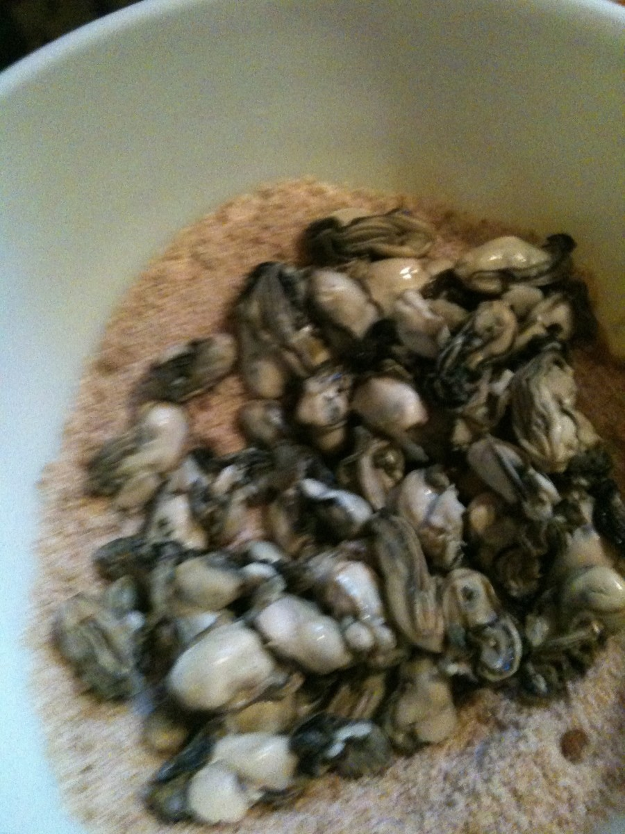 Coat oysters in cure mixture