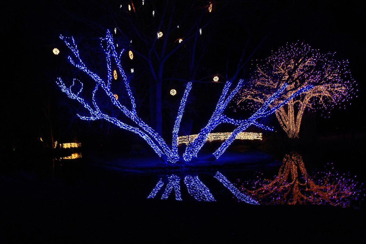 Trees by the pond--Holiday and Christmas Lights in Littleton