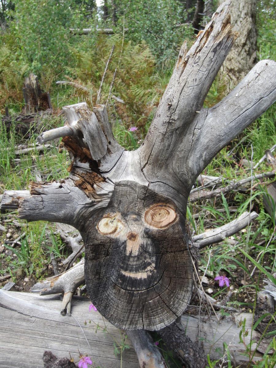 Weird Looking Tree Stump along hiking trail on Mt. Lemon, AZ