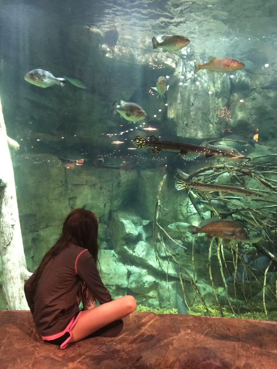 Viewing the fish in the centrally located aquarium