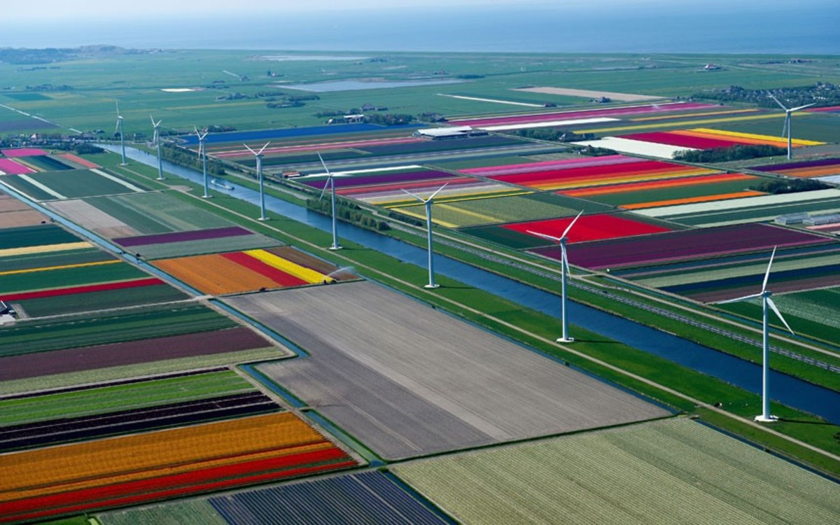 windmills, flowers and canals in one perfect scenery...