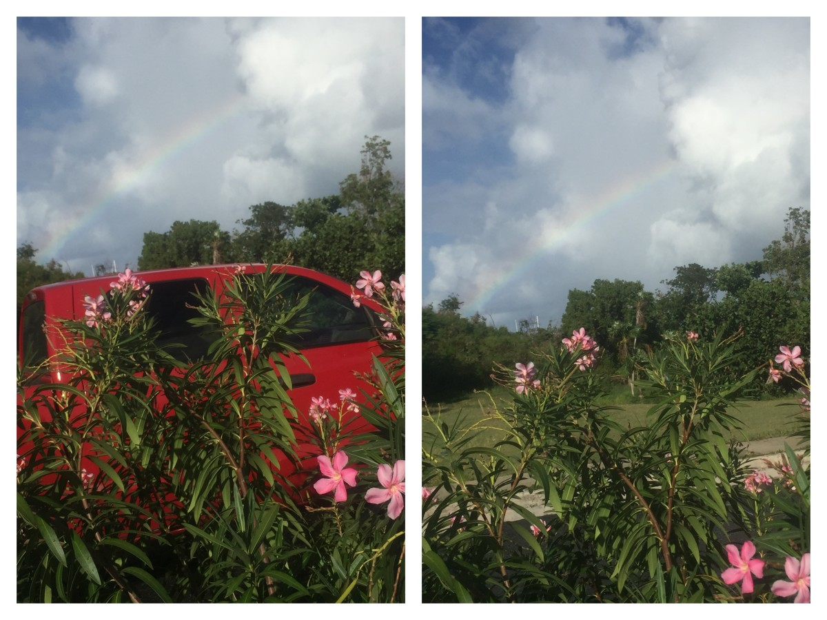 August 22, 2018 @ 8:11am. Brewers beach, uvi center road flowers. I pass the second speed bump from West and wow the Rainbow expanded to the amazing view, just then a red truck passes. Yup a rainbow in it's angles.