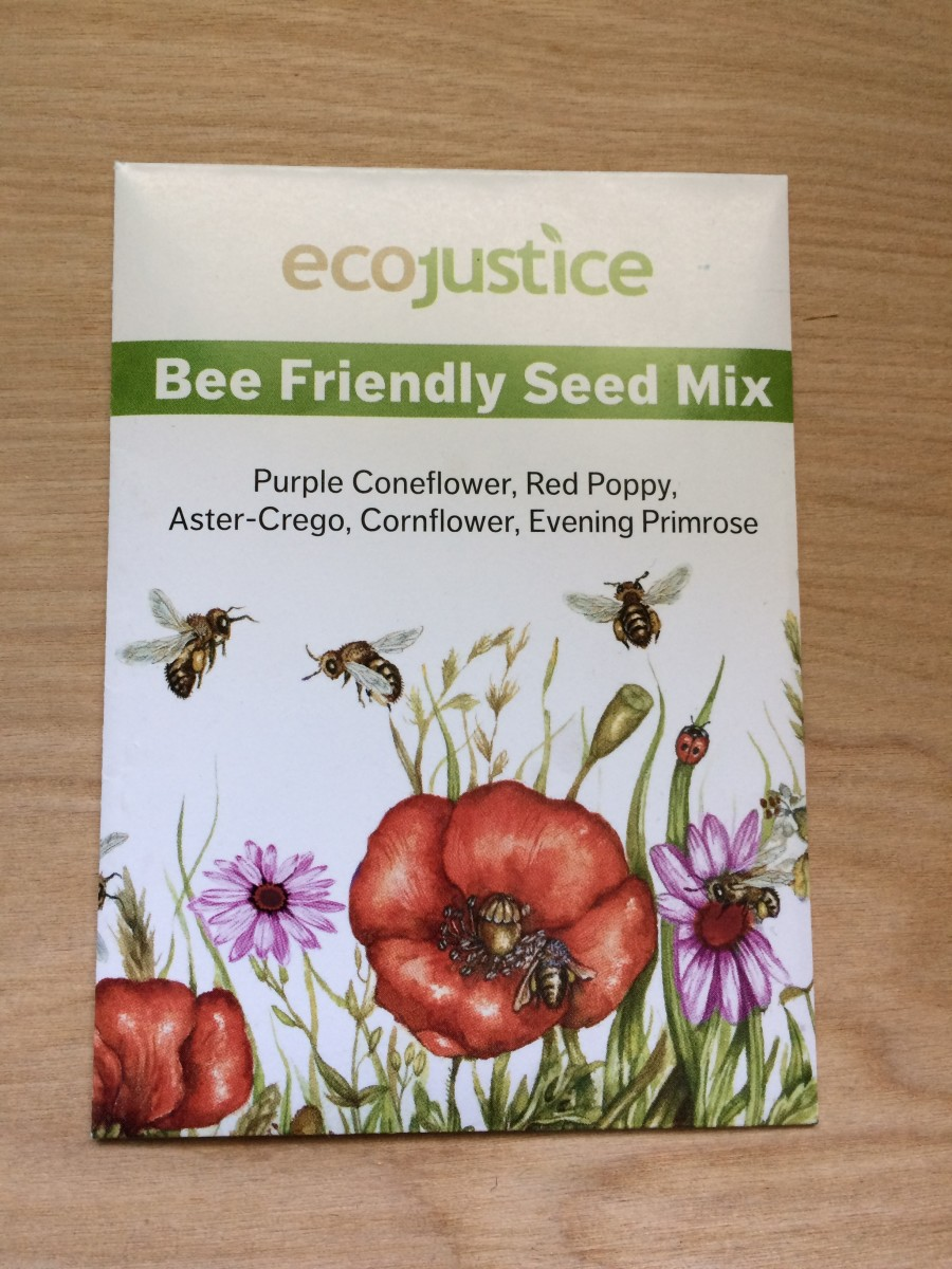 Growing a Bee-Friendly Seed Mix in Kingston, Ontario