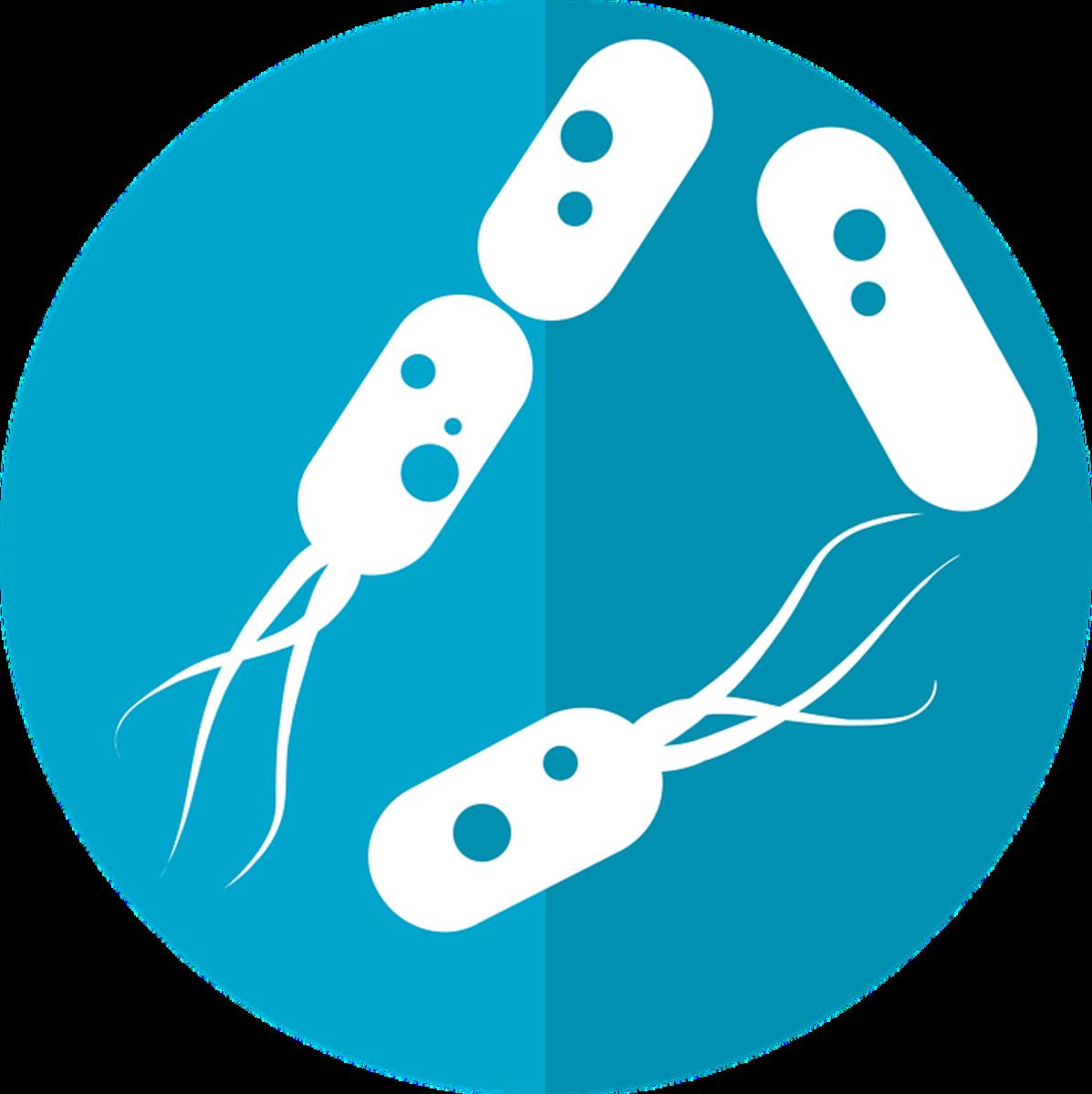 How Do Prebiotics and Postbiotics Make Probiotics More Beneficial to Us?