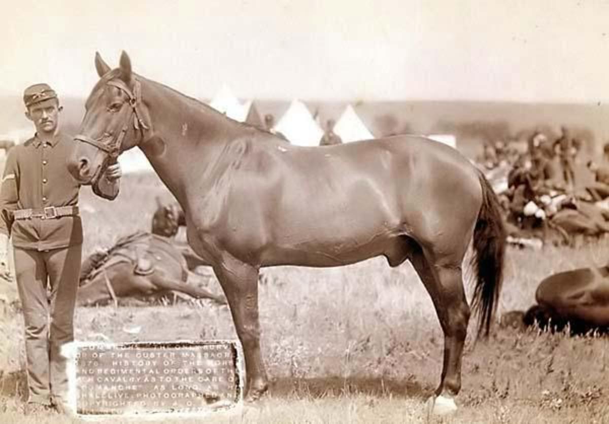 Comanche, the lone survivor of Custer's last stand.