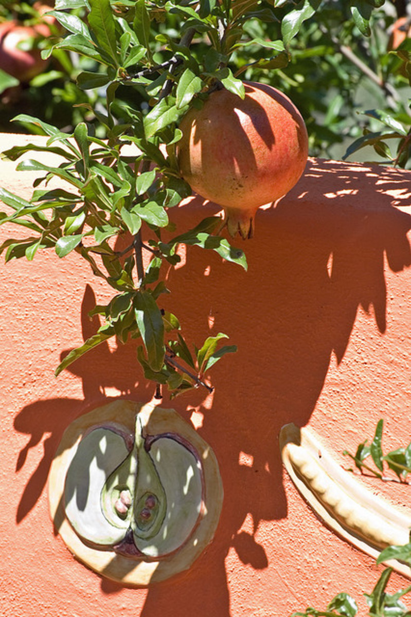 Pomegranate Tree is hardy and easy to maintain