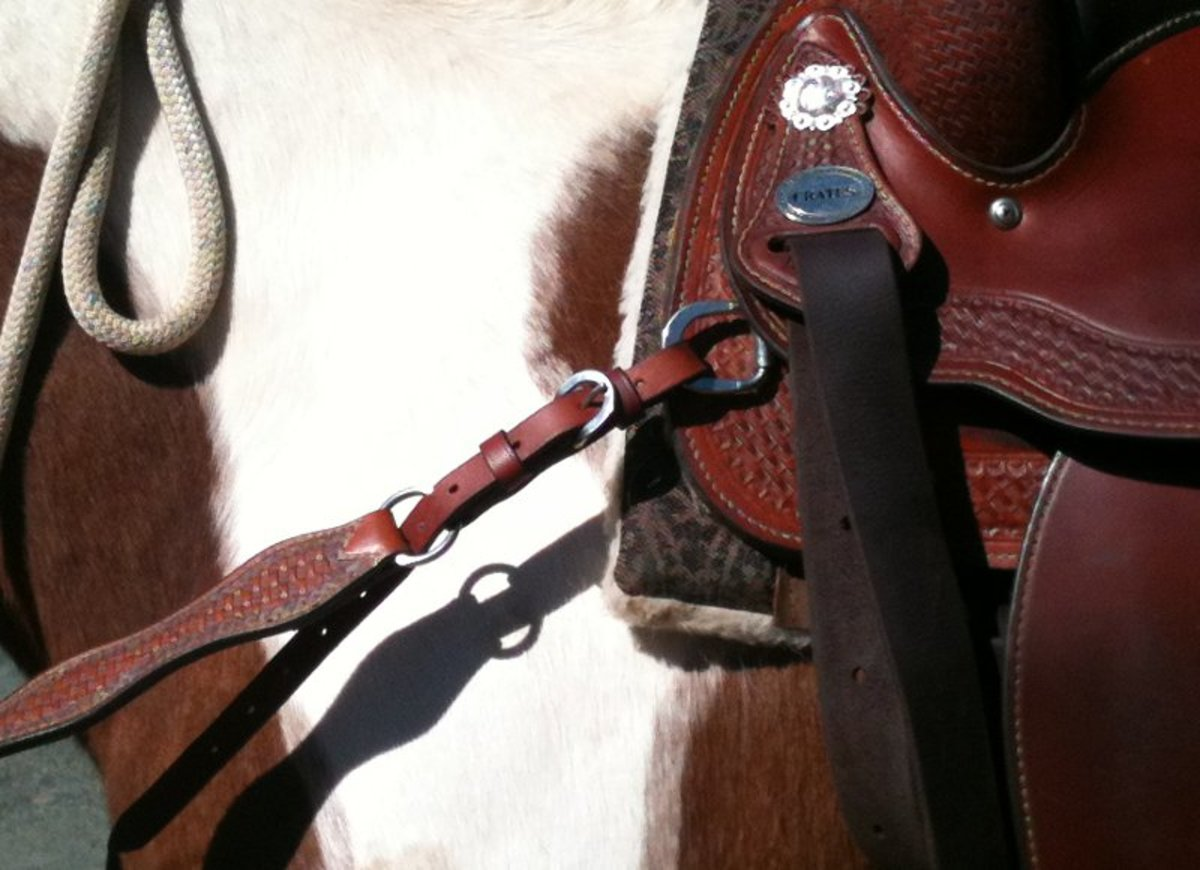 The breast collar attaches to both sides of the saddle, and between the front legs on the cinch.
