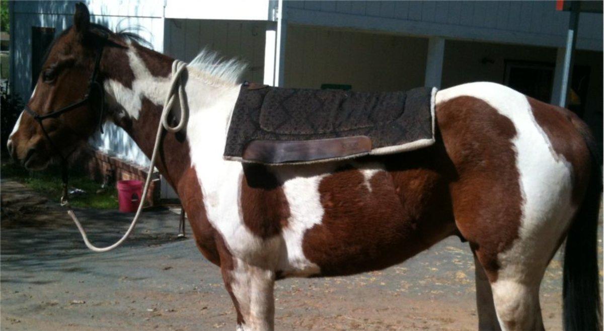 Saddle pad