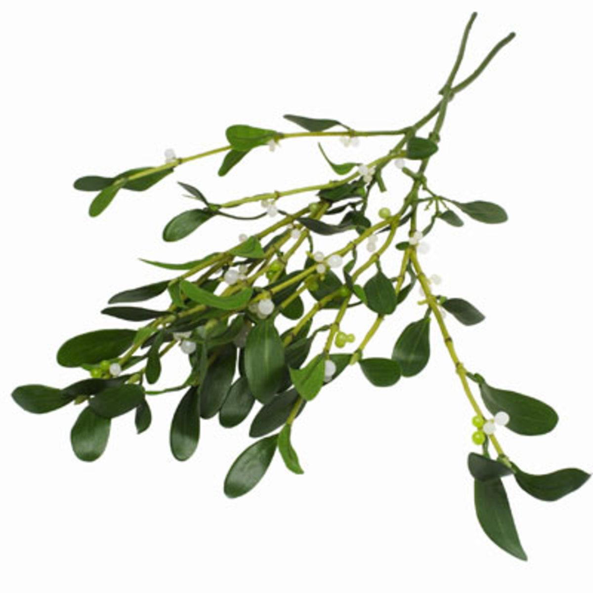 Mistletoe - Odin's younger son Baldur could only be harmed by arrows made of mistletoe twigs. Loki tricked Blind Hodr into loosing off a mistletoe arrow at Baldbur