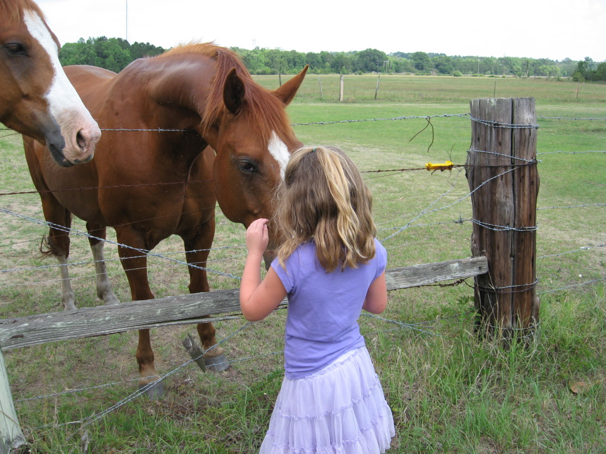 Horses can be loving, trusting, loyal creatures.