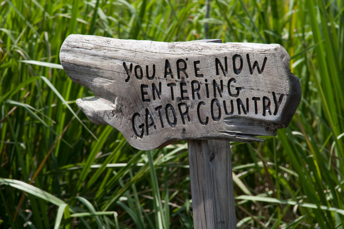 travel-visit-swamps-alligators-in-louisiana
