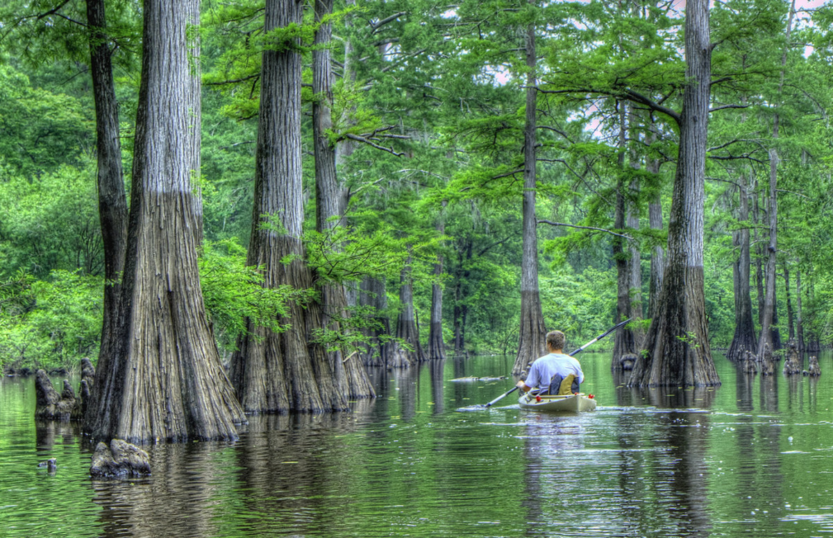 Kayaking through the bayou.