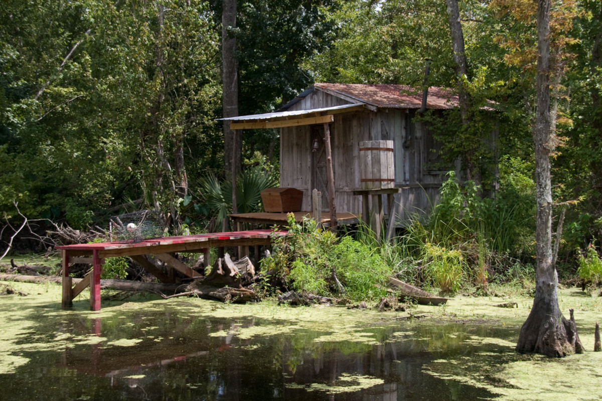 Many homes are found in the swampland.  Cajuns travel by boat to and from their homes.