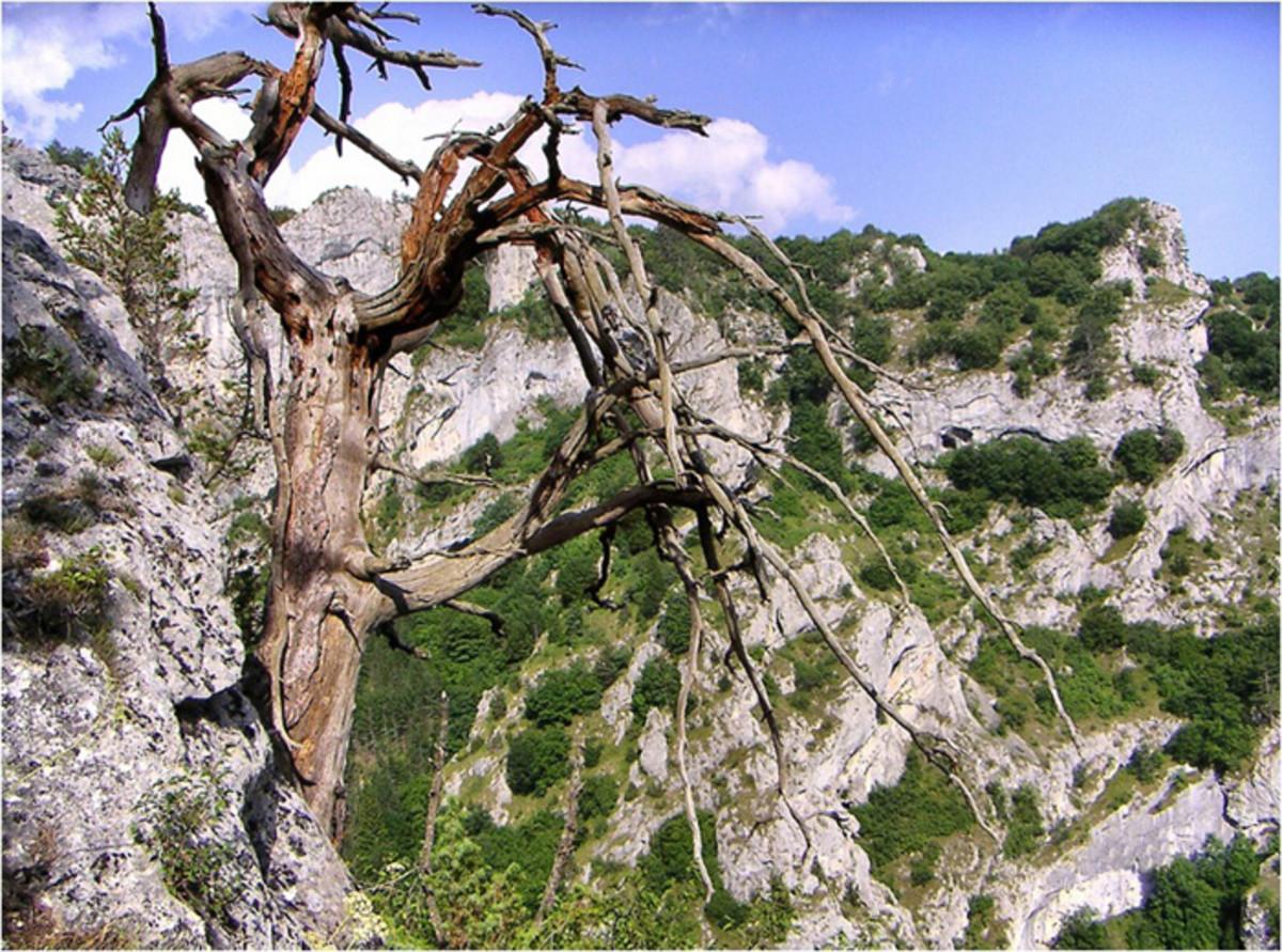 The Trigrad Gorge
