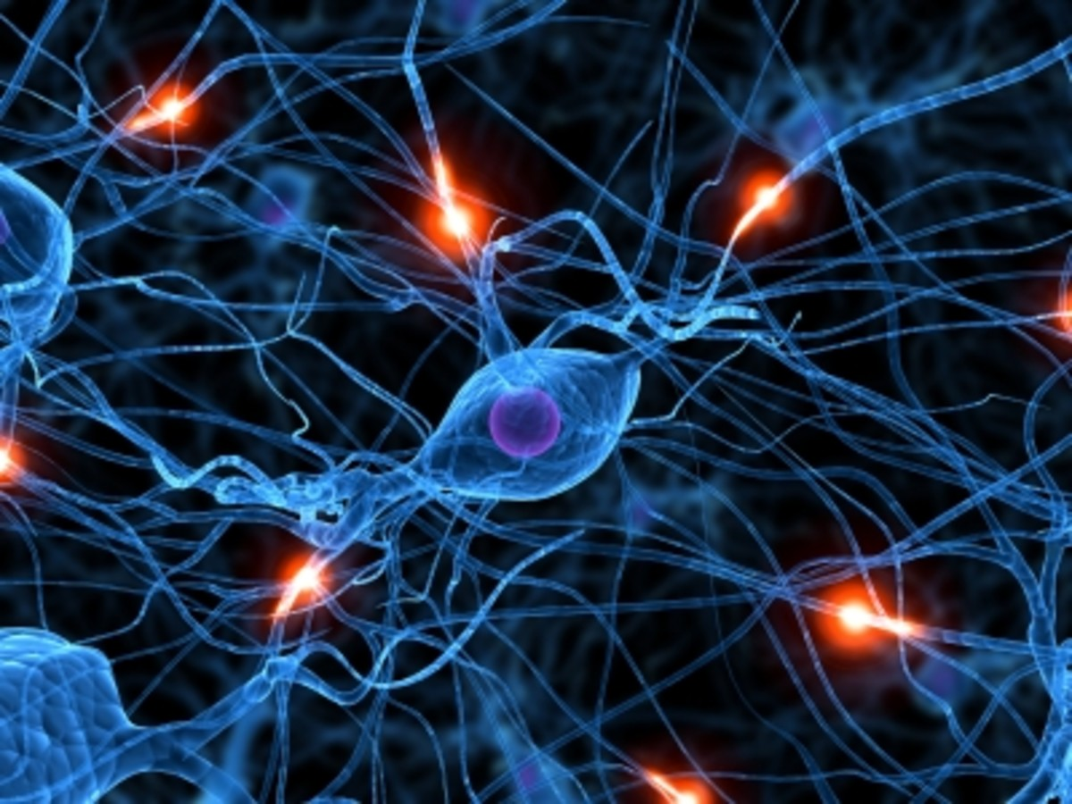 More study must be done to understand what can be neurotoxic to some and harmless to others