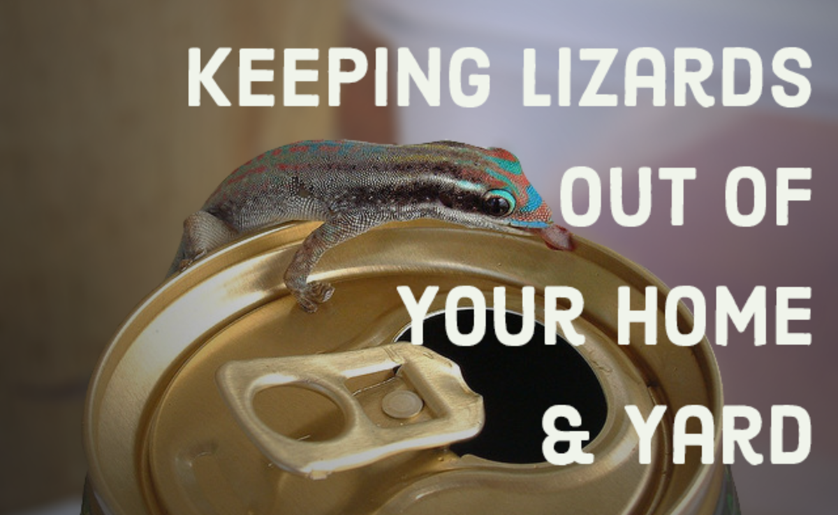 How to keep lizards under control in your home and yard.