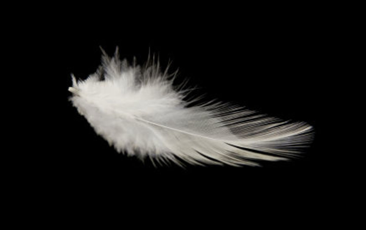 Similarly, feathers are a sign that birds may be nearby.