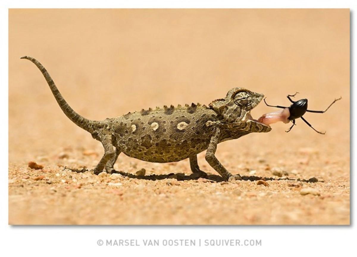Lizards eat pesky bugs.