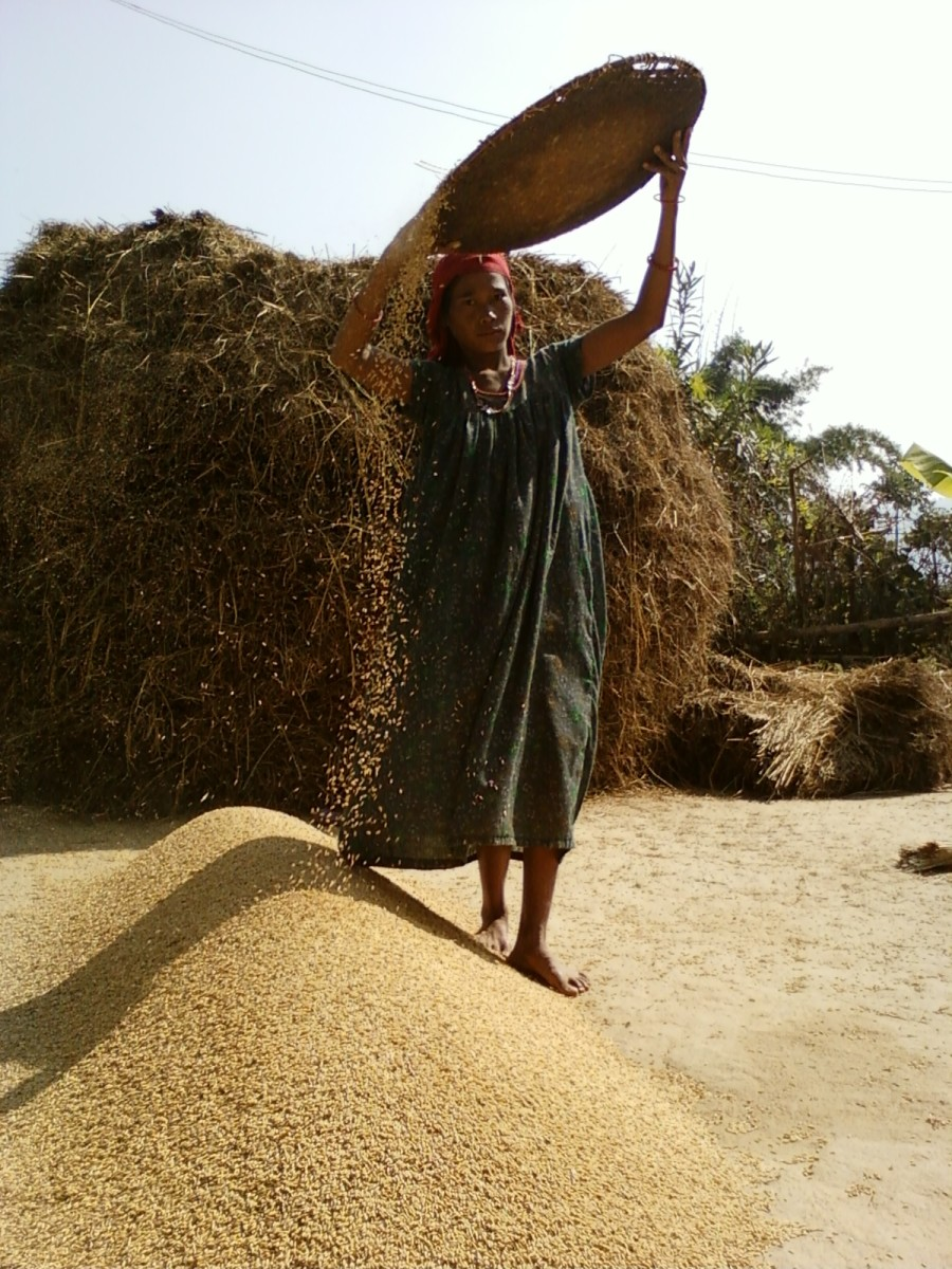 A middle aged woman cleaning rice kernel