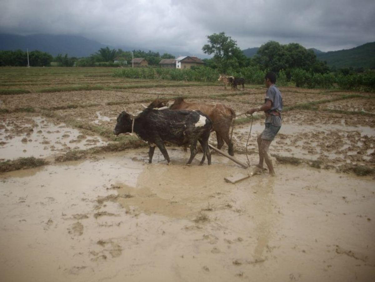 Farming techniques in Nepal are two thousand years old.