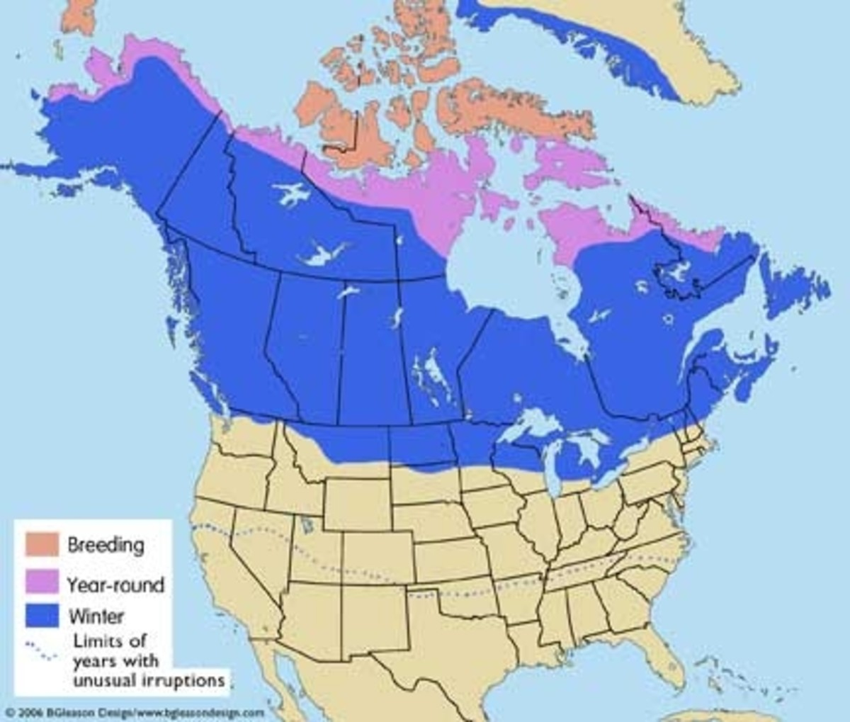 North American range of the Snowy Owl.