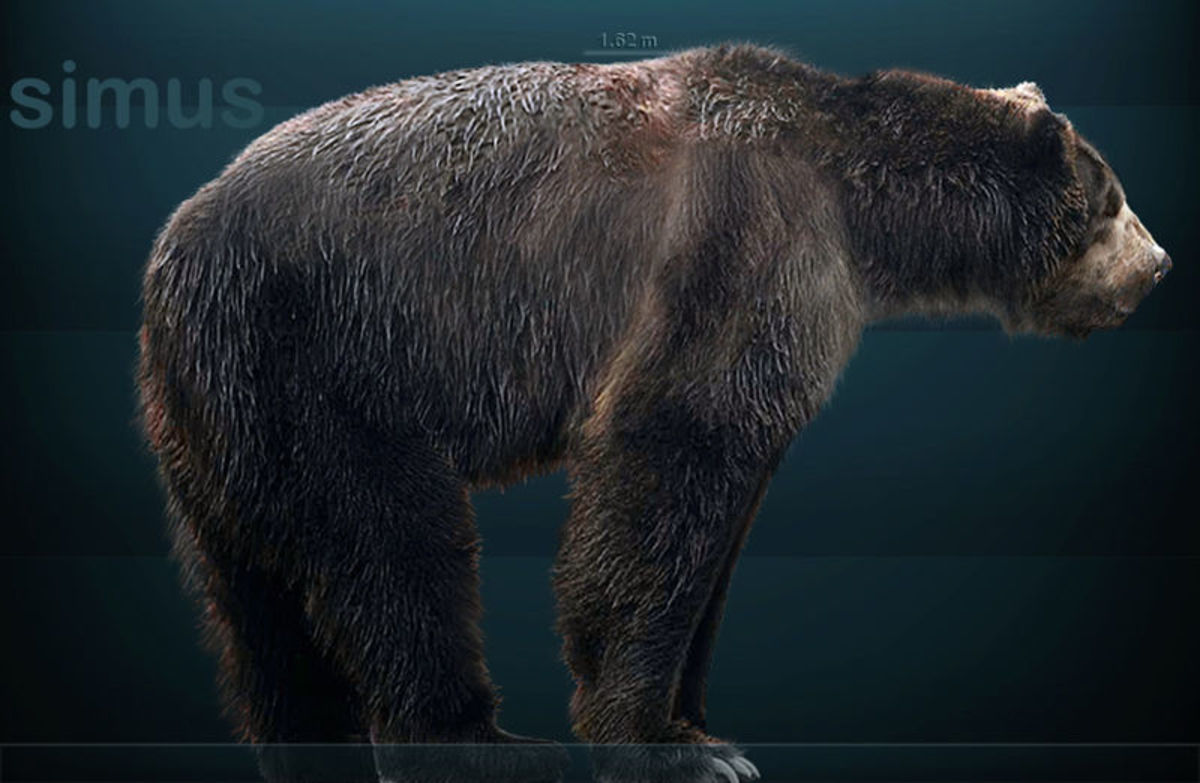 The short faced bear, the biggest mammalian carnivore to ever hunt on land.
