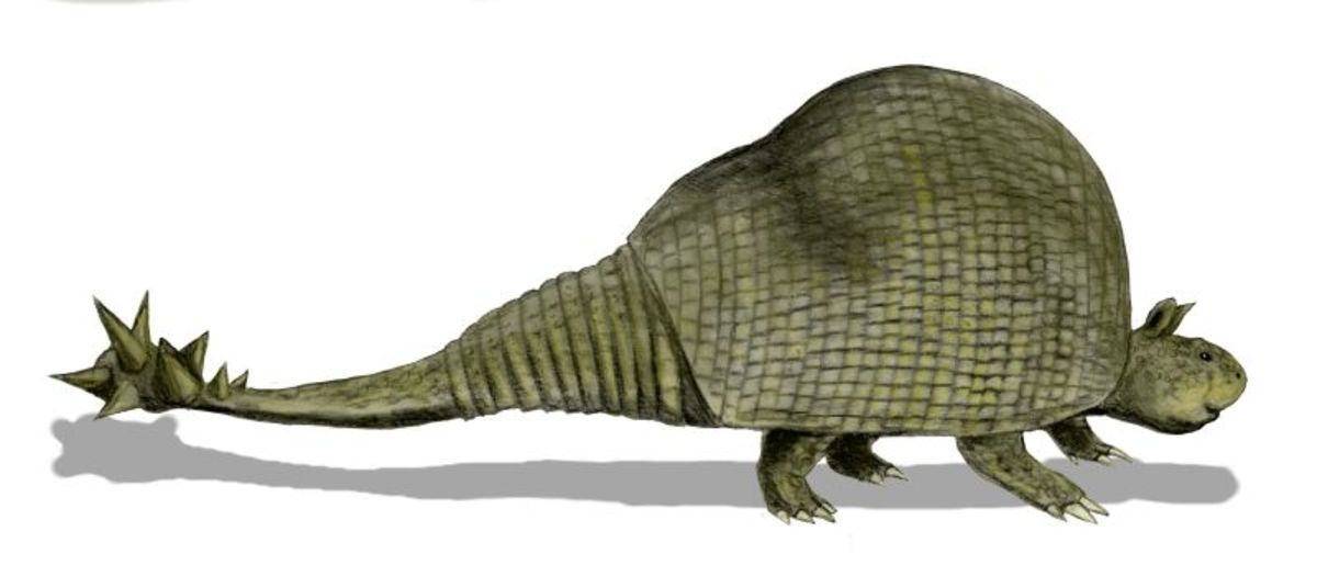 This is doedicurus, the giant relative of the armadillo with its fearsome spiked tail.