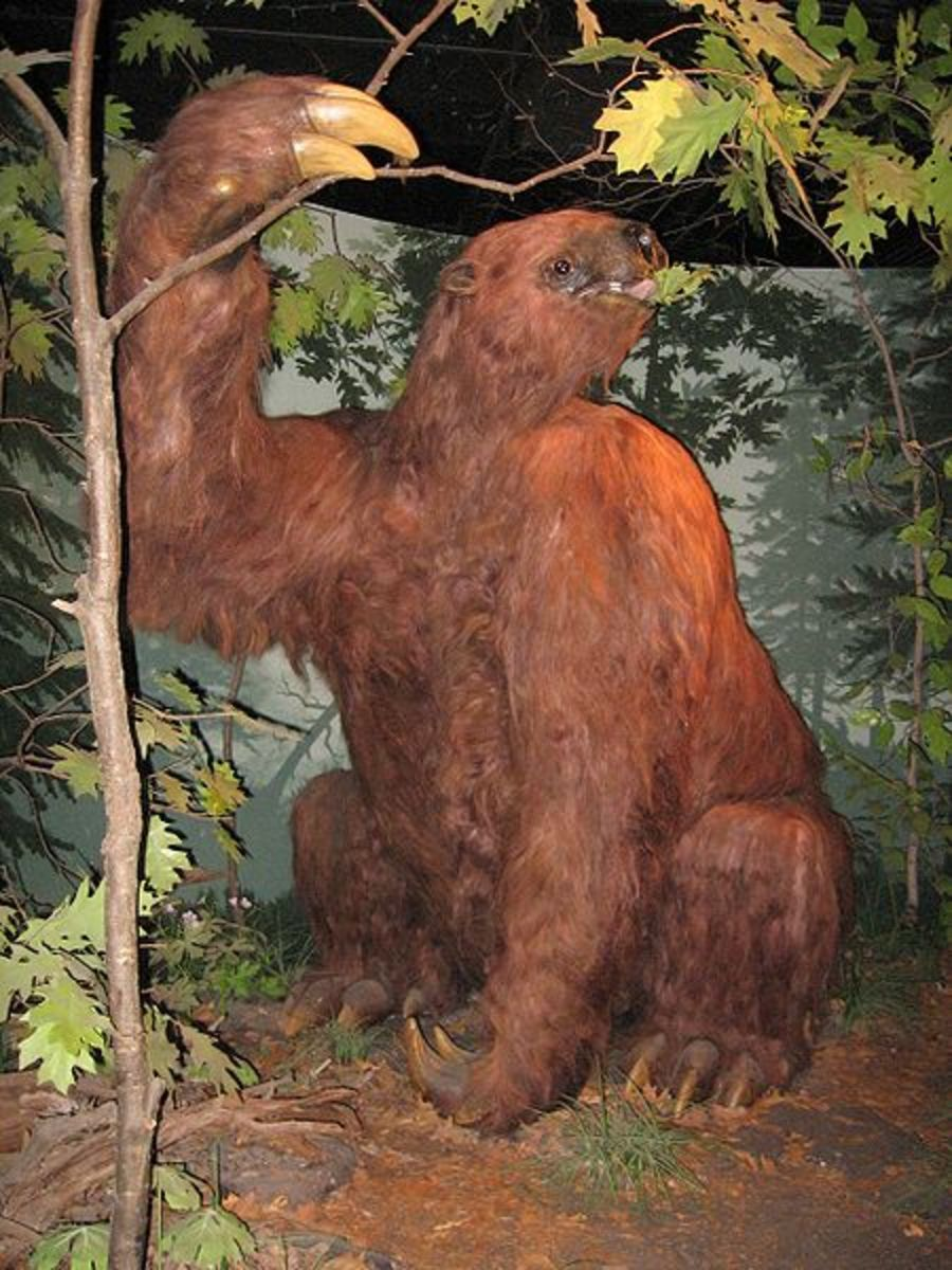 A reconstruction of one of the giant ground sloths.