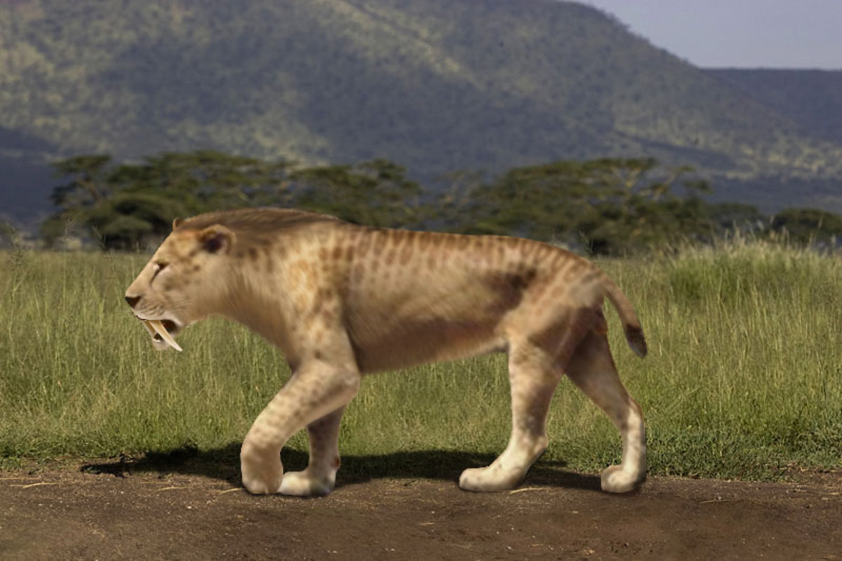 A reconstruction of smilodon