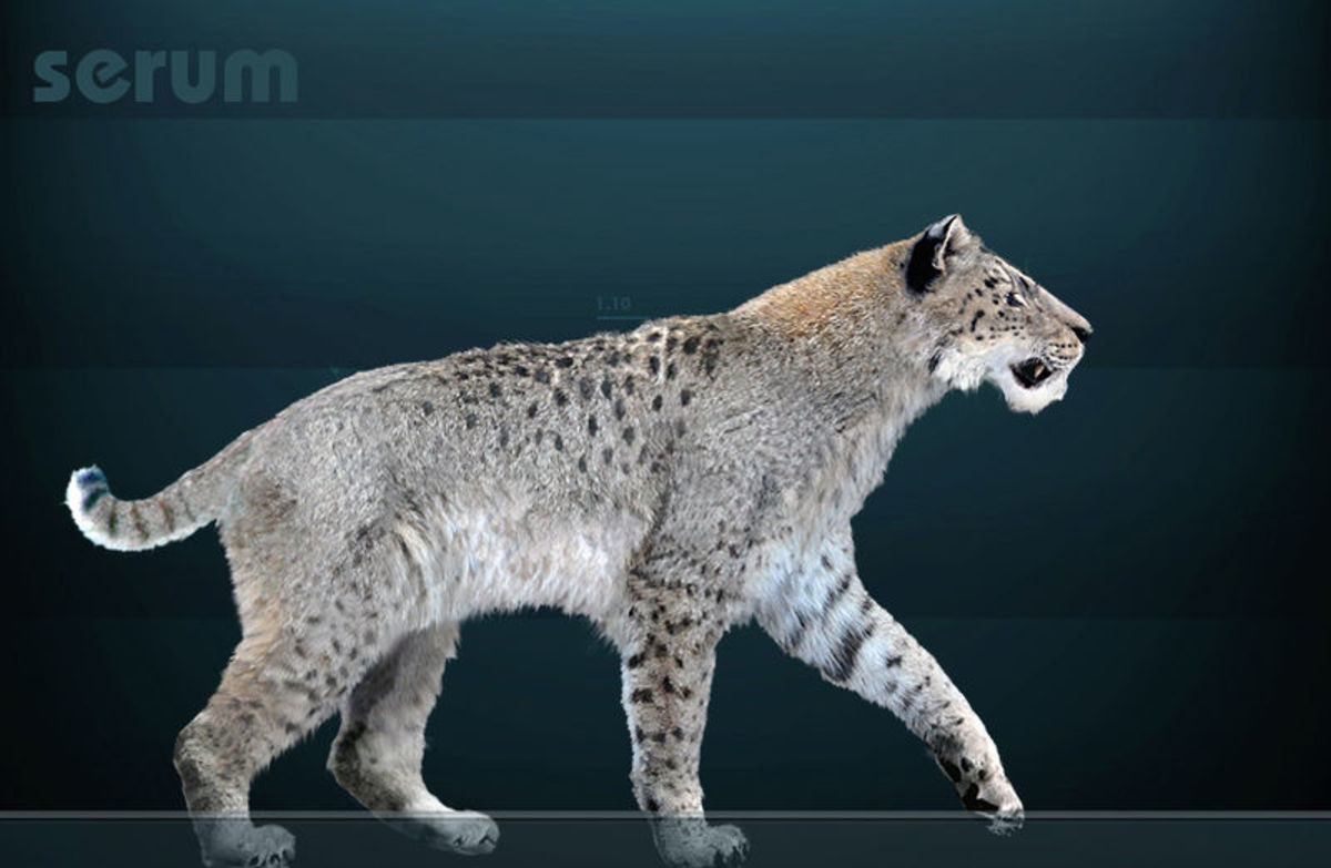 The American scimitar cat, also known as Homotherium.