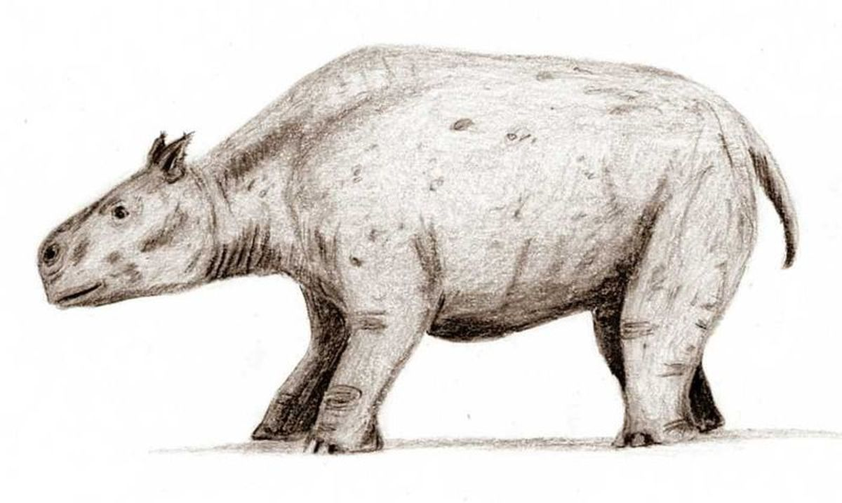 Another oddity, this time the lumbering rhino sized toxodon.