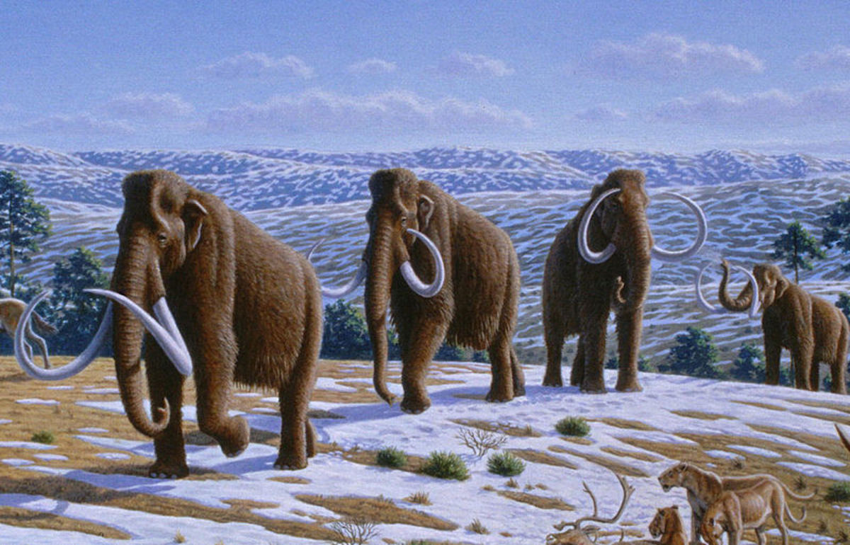 A herd of woolly mammoths walking across the tundra watched by some American lions.