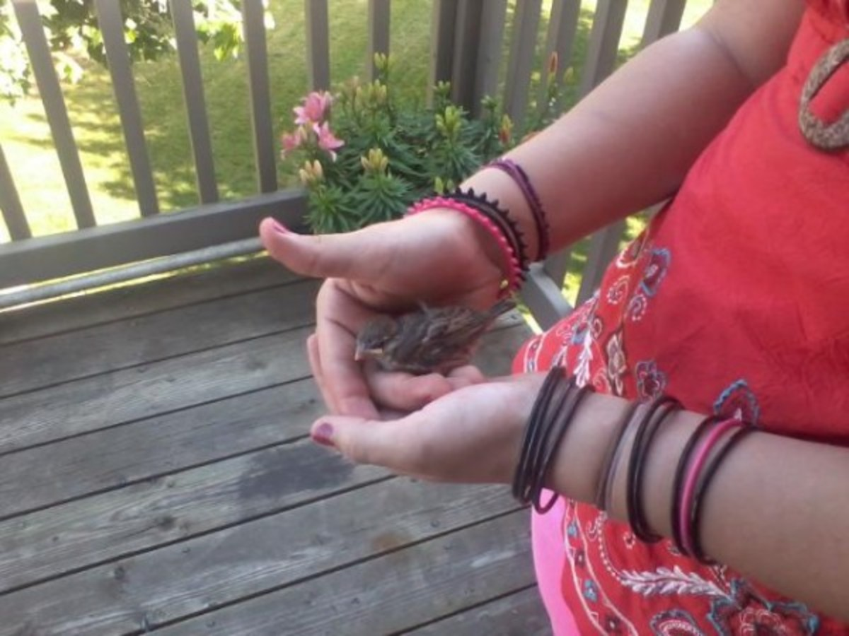 Found a Baby Bird, It's Injured What Should I Do?