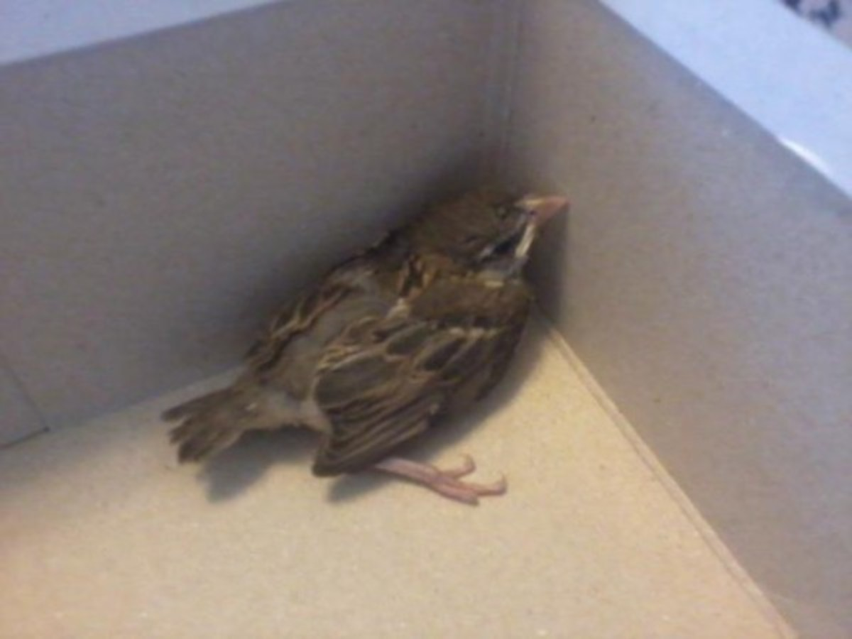 Here is the little bird in the shoe box.