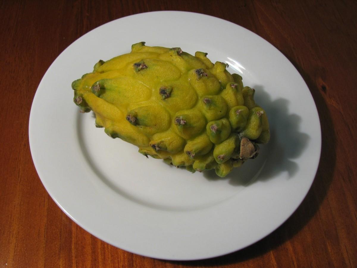 Yellow Pitaya Fruit (Hylocereus megalanthus)