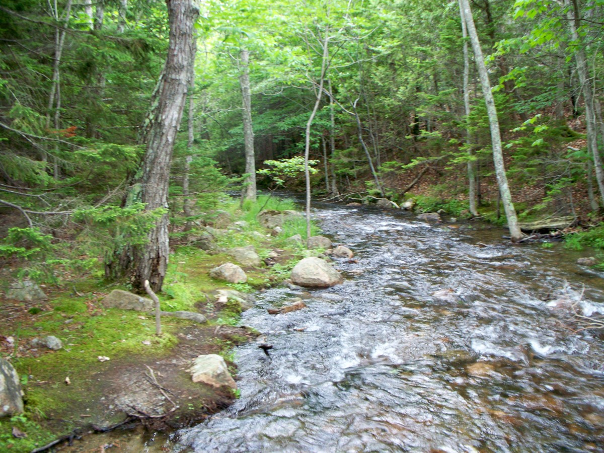 Stream near Jordan Pond
