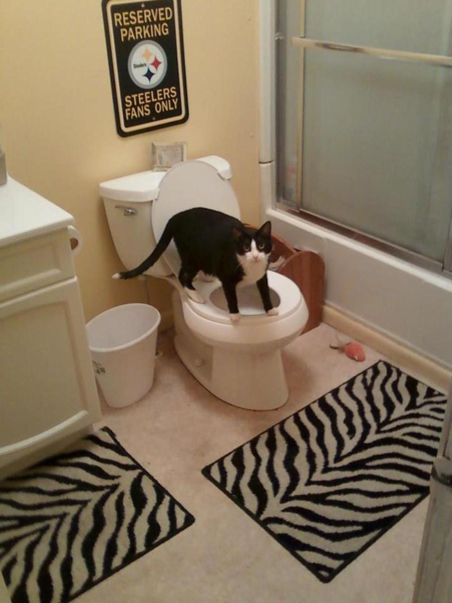 I have to keep telling kitty no baths in the toilet.