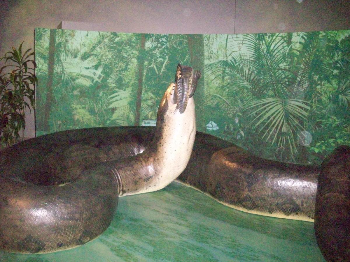 Titanoboa:  Prehistoric Monster Snake