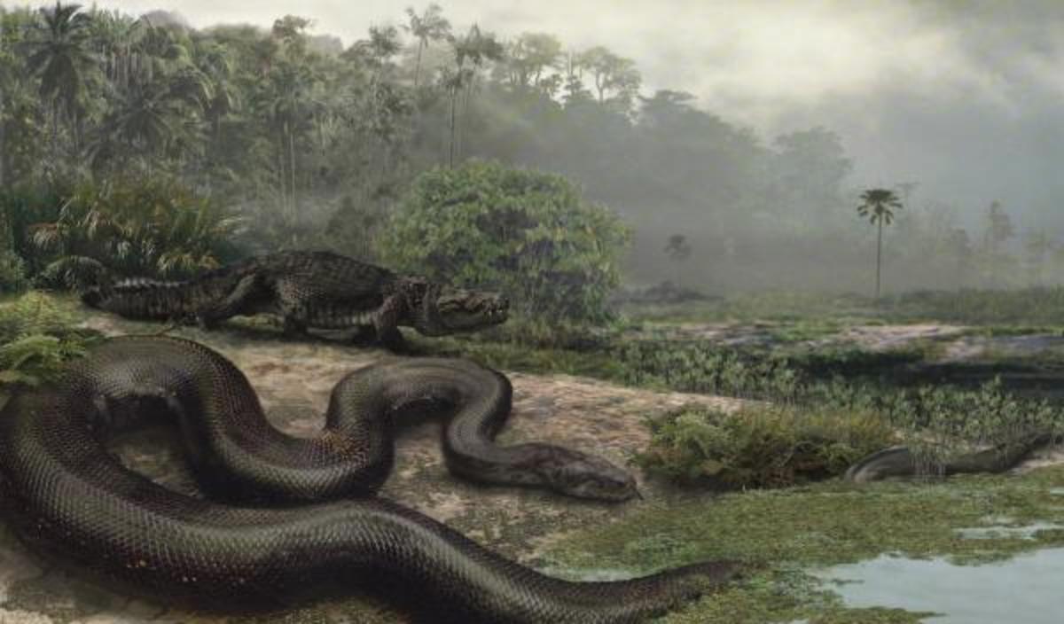 the-worlds-biggest-snake-ever-titanaboa-prehistoric-monster-snake