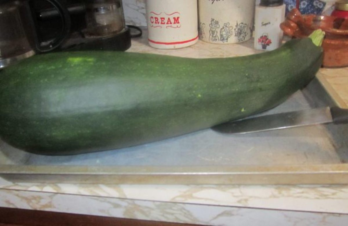 Now that is one big zucchini!