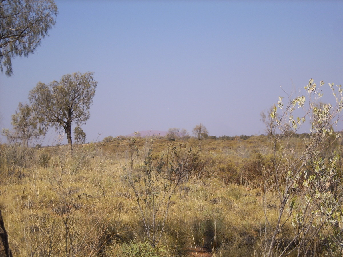 Outback Australia - home to introduced hoofed species