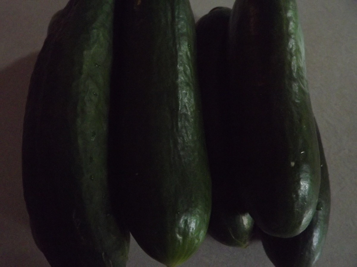 Use ripe cucumbers