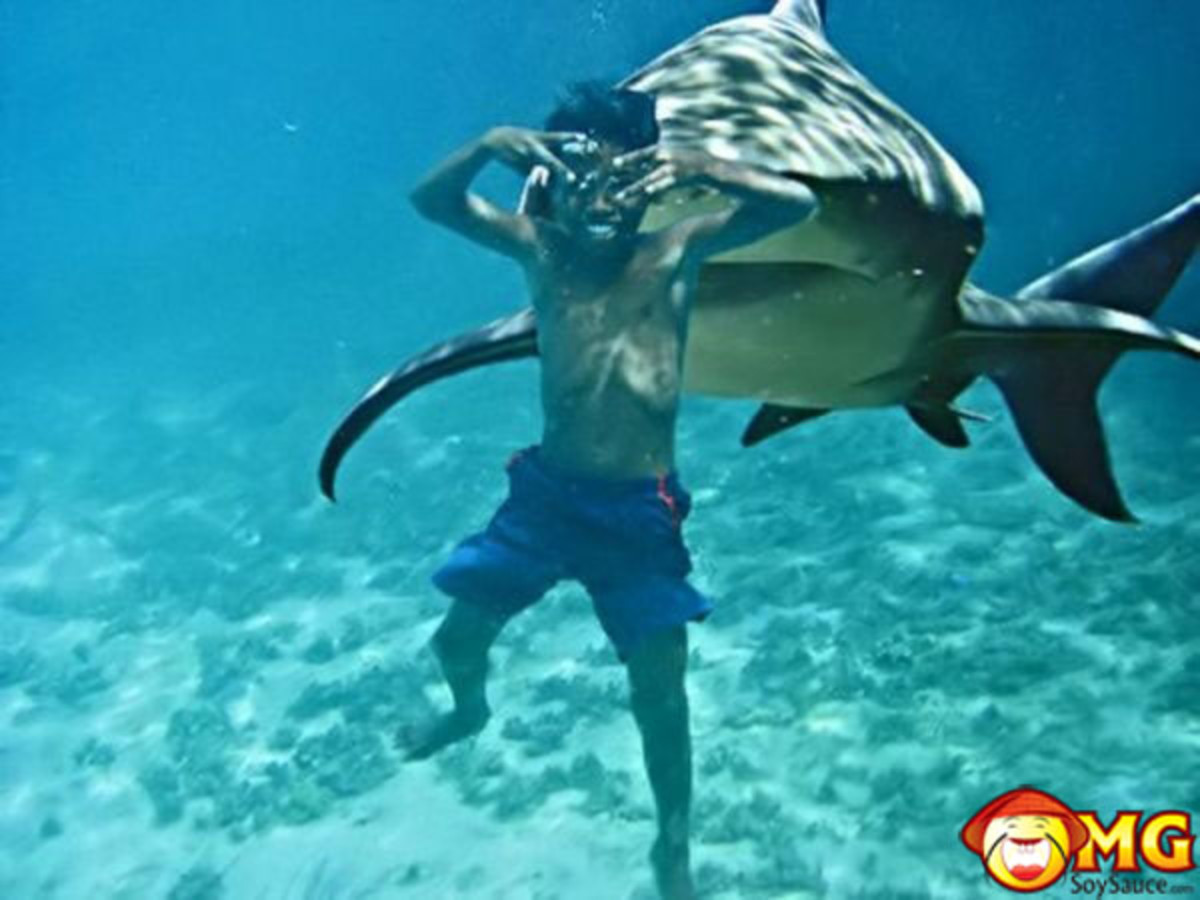 The frequency of attacks from sharks has increased dramatically  of late.