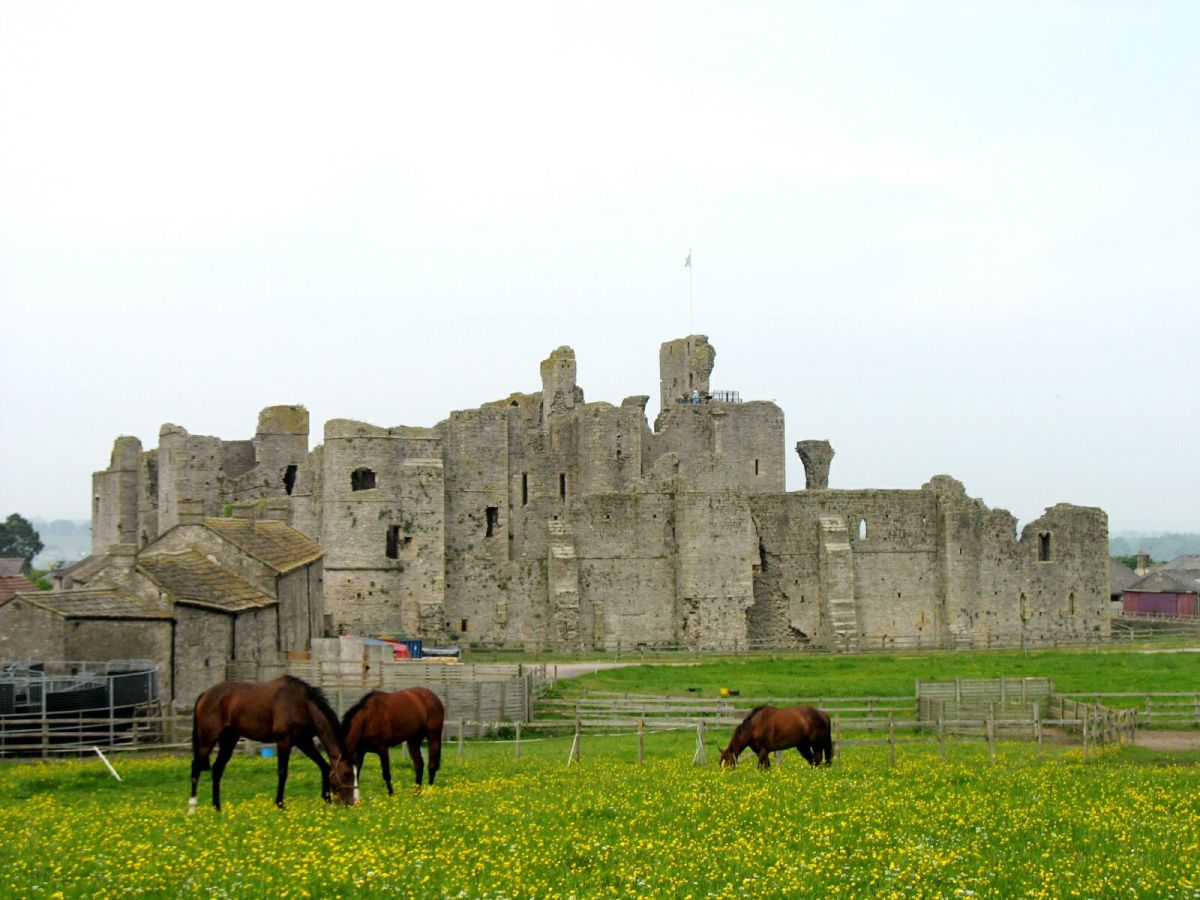 Seen from the west, Middleham Castle with some of the four-legged residents that keep the name of Middleham to the fore in racing circles